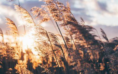 «ATCHOUM!!» : Les allergies saisonnières